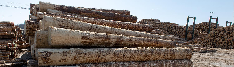 Lagerung von Baumstämmen
