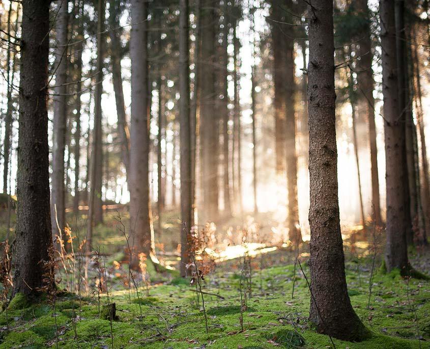 Waldstimmung bei Sonnenaufgang